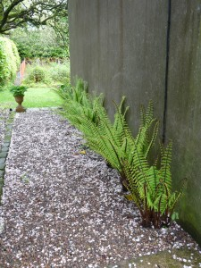 Ferns – Garden path, Ballymote House, Country House B&B, County Down