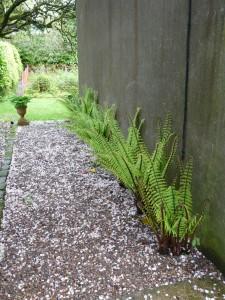 Ferns, Garden path, Ballymote House, Country House B&B, County Down