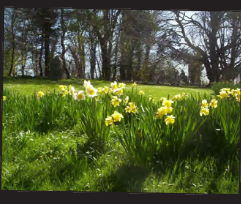 Spring in Ballymote House's garden, Ballymote House, Country House B&B, County Down