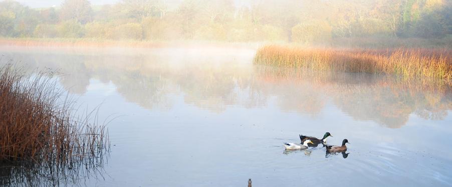 Bird watching – Quoile pondage, Downpatrick