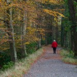 Walking – Tollymore Forest Park, Mourne Mountains